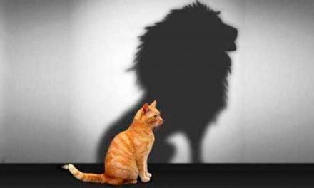Conociendo a fondo la autoestima